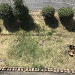 庭しごと -プラン編-