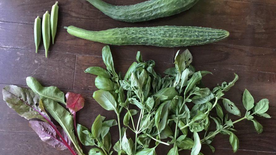 庭しごと -畑編14 トマトを立て直す-