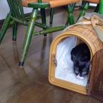 保護猫を迎える -2 お迎え初日-