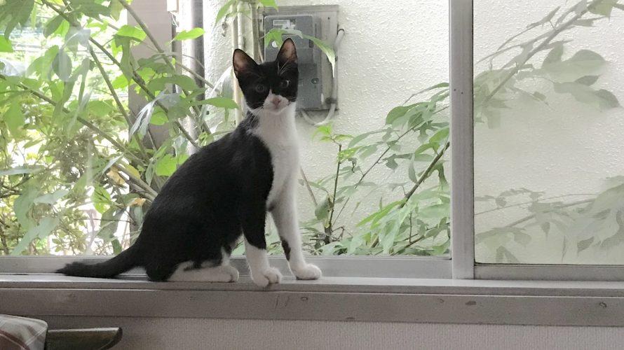 [100記事目] 保護猫を迎える -4 お迎え3日目-